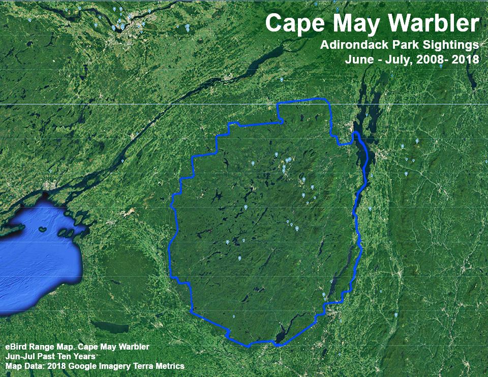 Adirondack Birds: Cape May Warbler | Setophaga tigrina