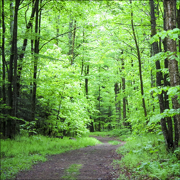Adirondack Habitats: Northern Hardwood Forest on the  Logger's Loop Trail at the  Paul Smiths VIC (23 May 2012)
