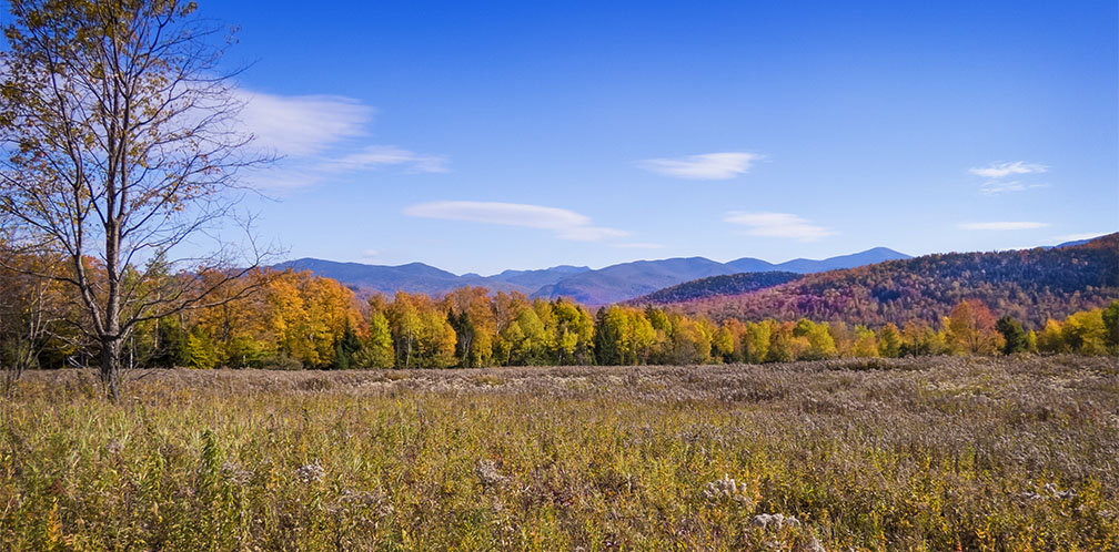 Adirondack Ecological Communities: Autumn colors from the Old Orchard Loop at Heaven Hill (11 October 2015)