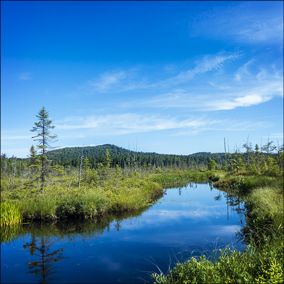 Adirondack Wetlands: Barnum Bog at the Paul Smiths VIC (27  July 2013)
