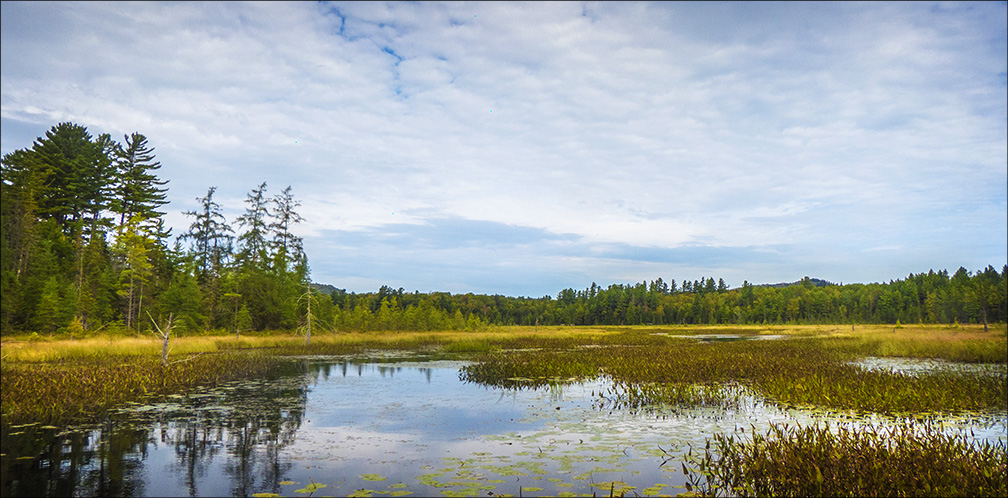 Adirondack Wetlands: Heron Marsh from the Floating Bridge at the Paul Smiths VIC (7 September 2013)