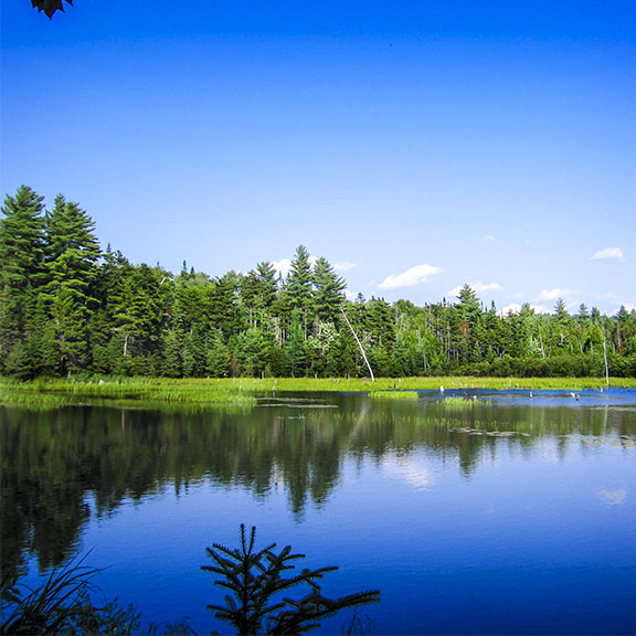 Adirondack Mammals: Beaver Pond in the Northern Adirondacks