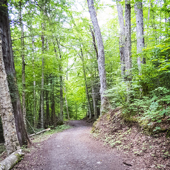 Adirondack Nature Trails: Loop Trail at Henry's Woods, Lake Placid (3 August 2015).