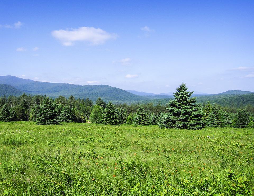 Adirondack Habitats