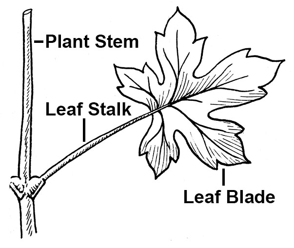 Simple Leaf Diagram